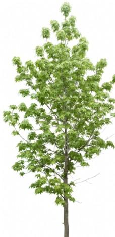 植物矢量图图片