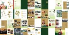 金浩茶油2012企业宣传画册图片