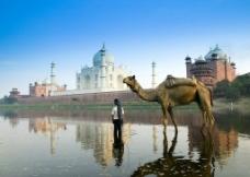建筑物骆驼图片