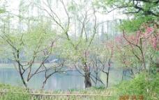 春天绿色图片