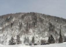 中国雪乡风景图片