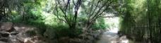 林间小道全景图图片