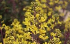 春季花卉摄影图片