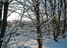 鄂尔多斯雪景图片