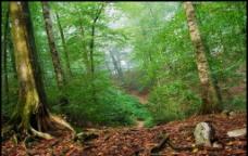 云南原始森林图片