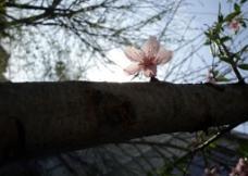 一朵绽放图片
