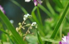 草地和小花图片