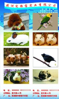 宠物易拉宝图片