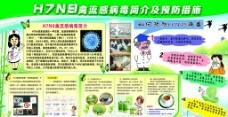H7N9禽流感预防展图片