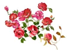 彩色花朵图片