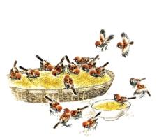 麻雀啄食图片