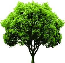 树的矢量图片