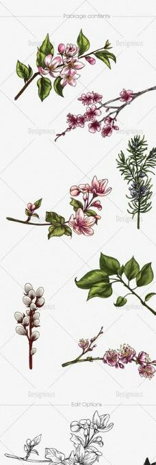 手绘花枝 树枝图片