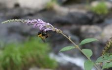 采蜜的蜜蜂图片