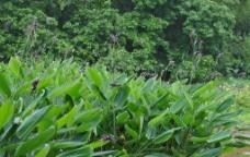 深圳洪湖公园图片