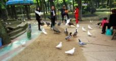 动物园风光图片