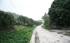 村旁小路图片