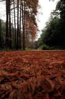 杭州九溪十八涧秋景图片