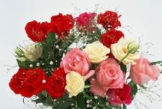 玫瑰花花束图片