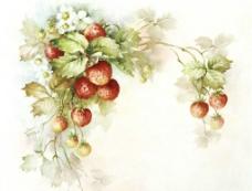 草莓绘画图片