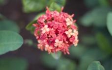 四叶小花图片
