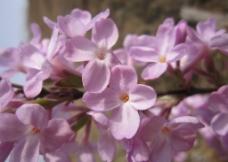 花丛 花图片