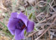 花 紫色图片