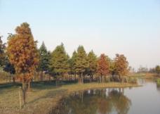 迷彩的秋天图片
