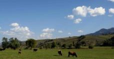 草原的风景图片