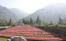 花园景观图片
