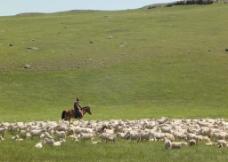 牧场 草原 内蒙古图片