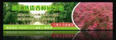 温江香樟园艺场喷绘图片
