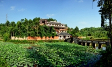 荷塘景色图片