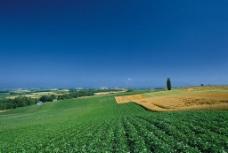 绿色原野图片
