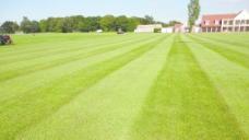 足球场草坪图片