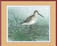 小鸟工笔画图片