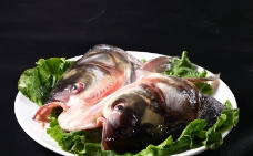 水库鱼头图片