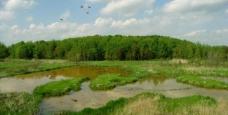春天原野图片