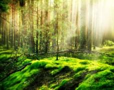 树林阳光美景图片