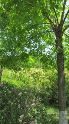 大自然图片_树木树叶_生物世界_图行天下图库