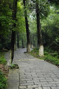 东莞水濂山森林公园图片