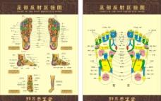 足部穴位图图片