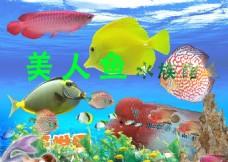 水族世界观赏鱼