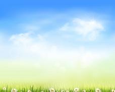 菊花 草丛图片