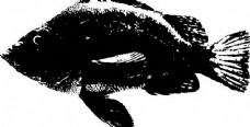 黑白鱼图片