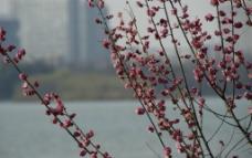 玄武湖公园图片
