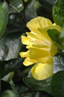 黄色 花朵图片