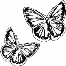 蝴蝶素描插画矢量
