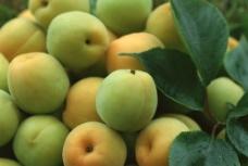 青色桃子图片