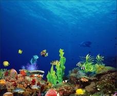 鱼缸背景图图片